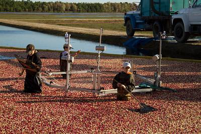 Cranberry Harvest, New Jersey http://wklein.smugmug.com/browse