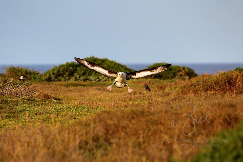 Landing  ©2019  Janelle Orth