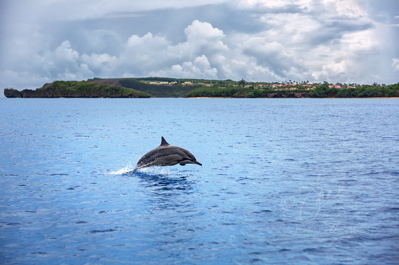 Dolphin Breach ©2014  Janelle Orth