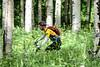 Snodgrass Trail - II