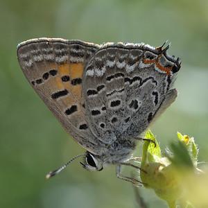 Willow Creek  Park - Flora & Fauna