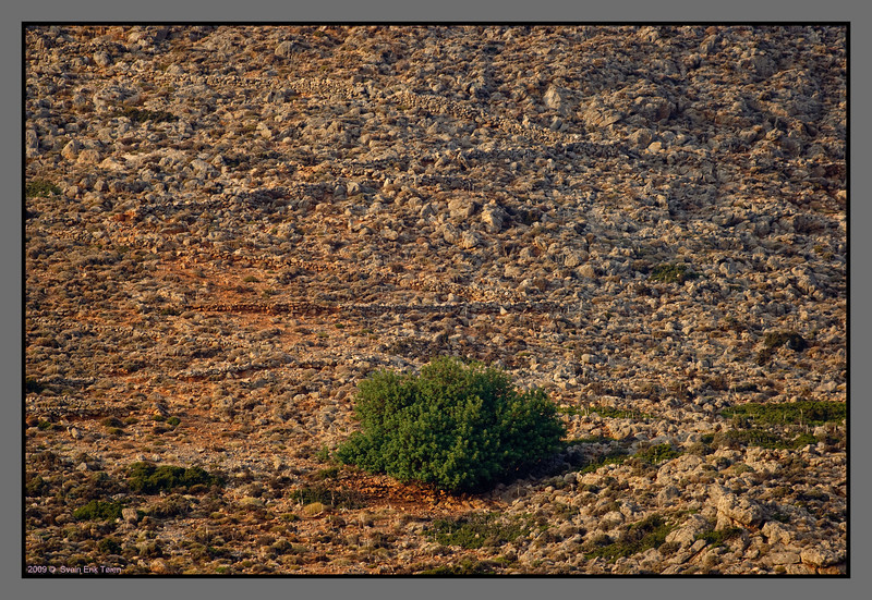 Tree and a zigzaging path high in the hillside above Loutro
