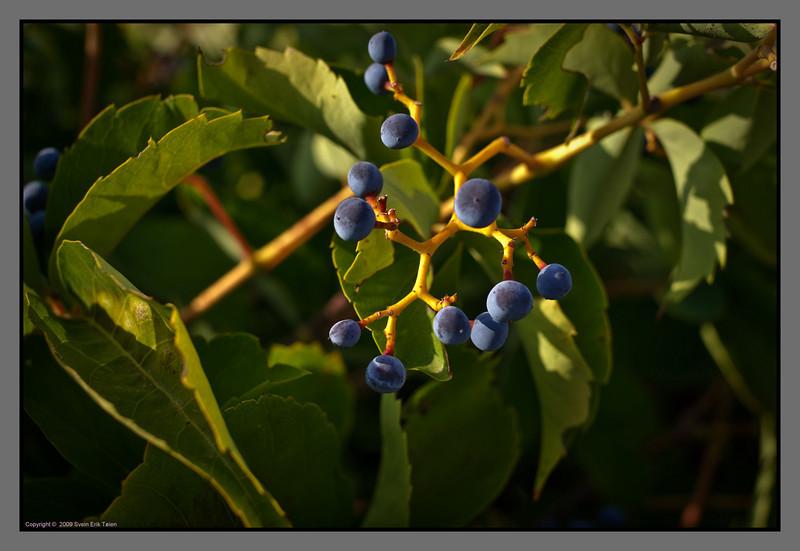 Autumn is rich on fruit...