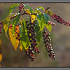 Autumn leavves and berries <br /> Stalos
