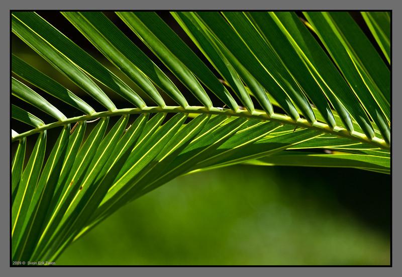 Palm curves