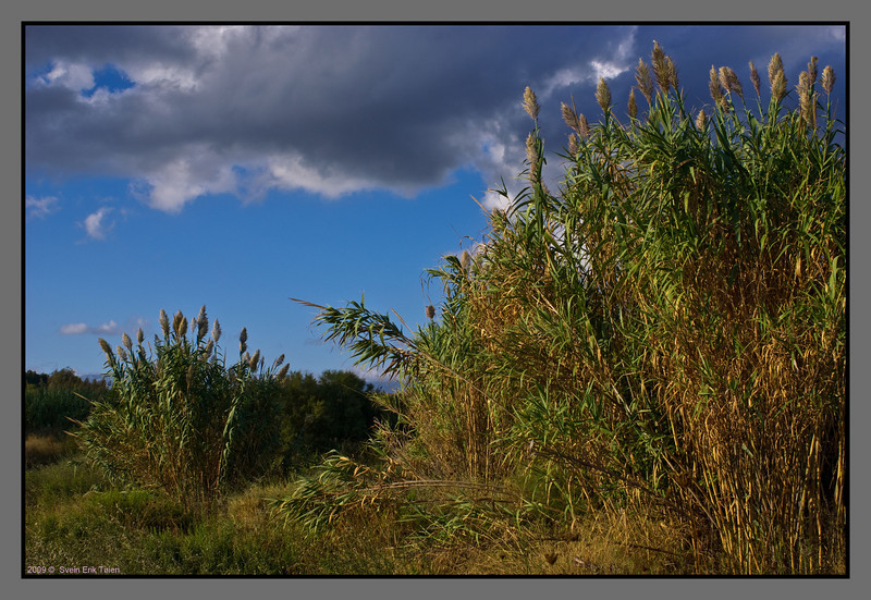 Vegetation at Stalos