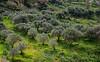 Olve grove - Stalos
