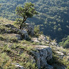 """burning bush"" on the mountain - Crimea - the ""Grand Canyon of Ukraine"""