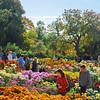 Nikitsky Botanical Gardens, Nikita, Crimea (near Yalta), Ukraine -
