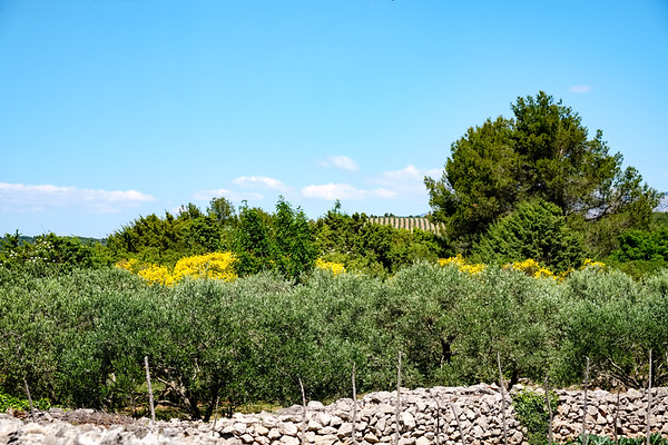 Olives and a dry stone wall