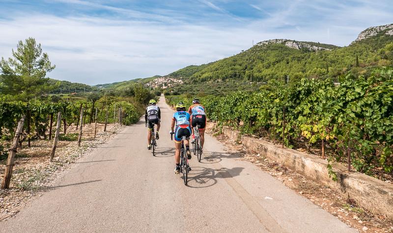 The vineyards of Korcula