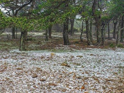 The hail made the forest beautiful and different