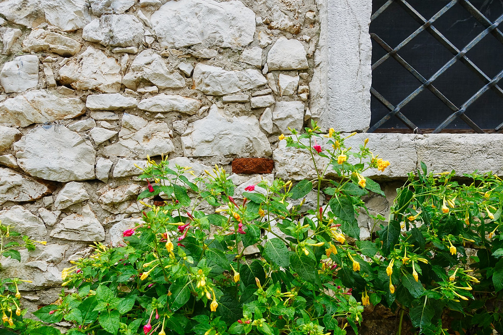 Flowers and Wall