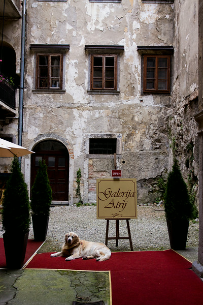 This friendly dog greeted the visitors to a gallery in Ljuljana, Slovenia