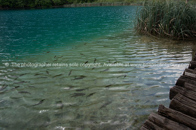 "Croatia, ""Heaven on Earth"", The oh so beautiful Plitvice Lakes. SEE ALSO: www.blurb.com/b/2340783-croatia"