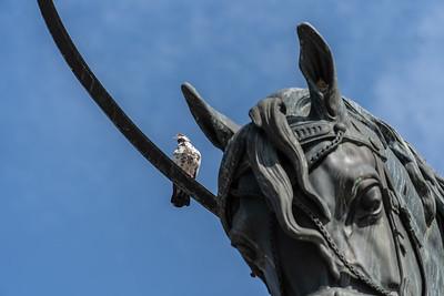 In the central square in Zagreb