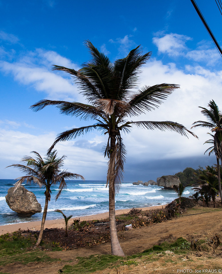 Palm tree Rocks