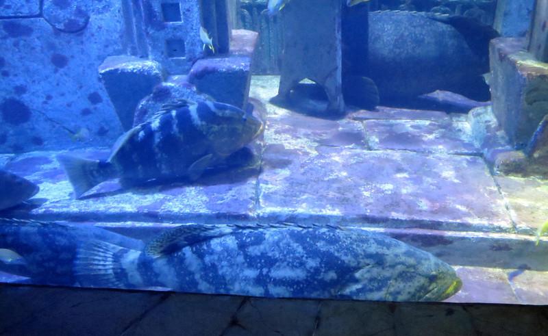 Grouper Exhibit