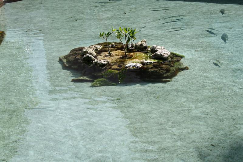 Estuary Lagoon