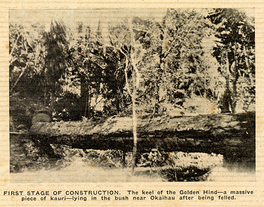 "From the ""Golden Hind"" came, kauri logs the likes of which will never be seen again, only 72 years ago."