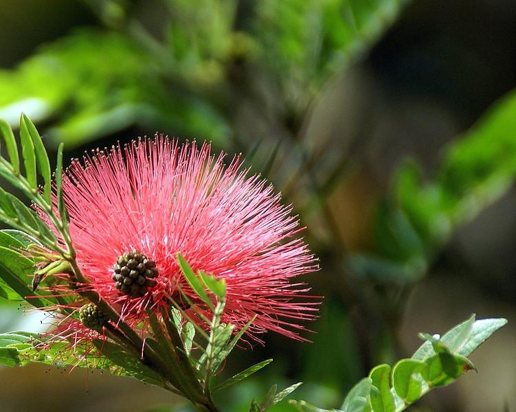 Costa Rica Flower