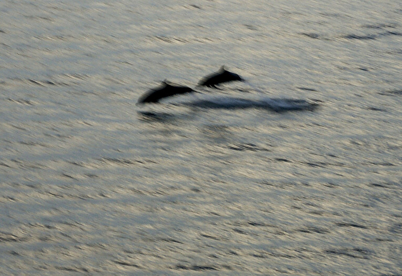 More dolphins jumping