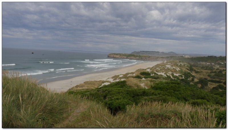 coast of the Otago peninsula (109292750)