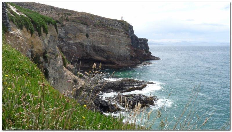 Tip of the Otago peninsula (109292850)