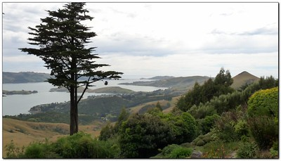 view from the Larnach gardens (109292788)