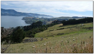 coast of the Otago peninsula (109292753)