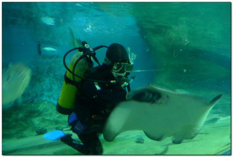 Feeding the rayssharksfish (109293549)