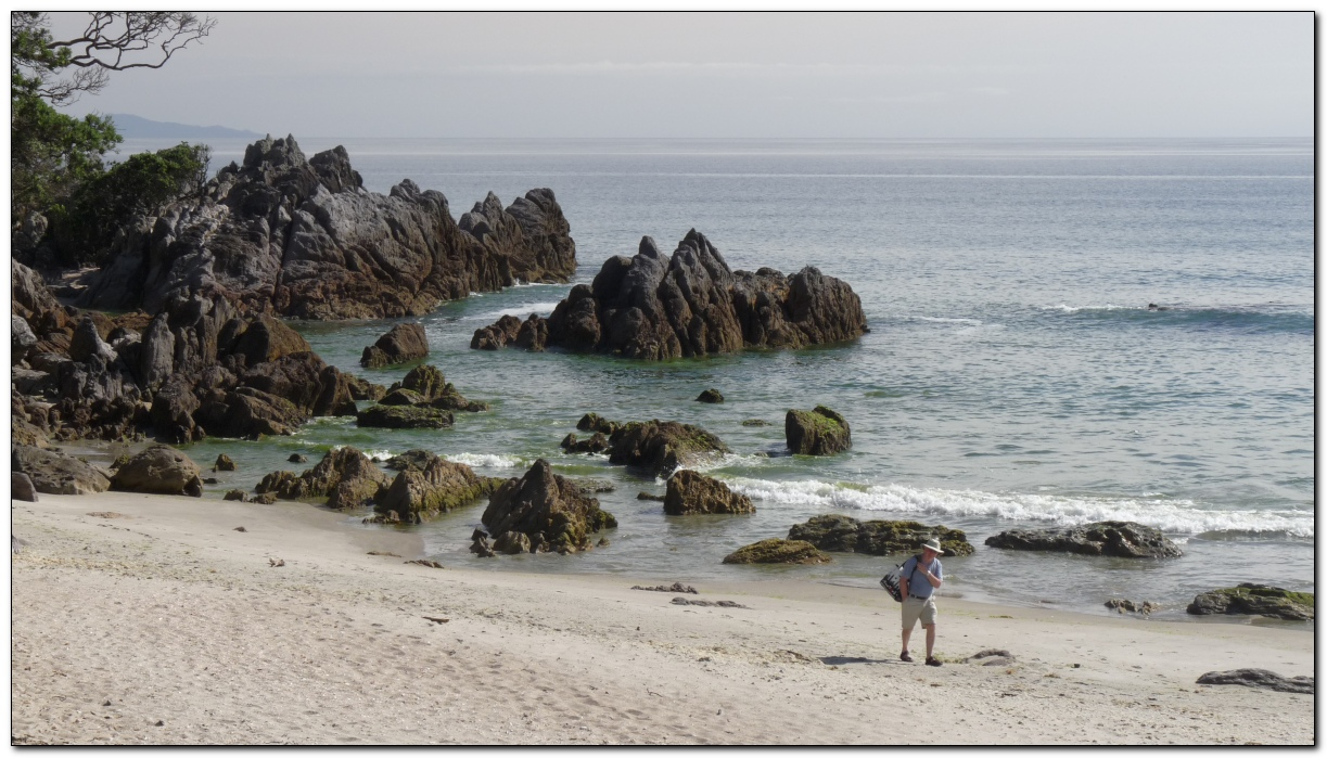 Rocky shore  - Tauranga