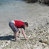 ...and looking for some shells for our collection...