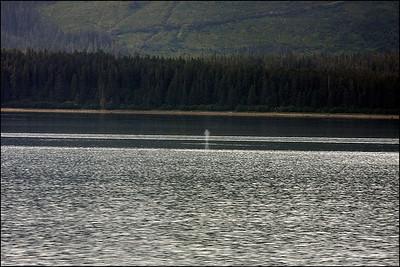 Alaska-GlacierBay(edit)_0004