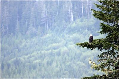 Alaska-Sitka(edit)_0065