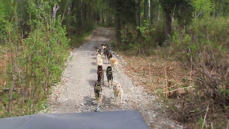 2014-2055 Dog Sled