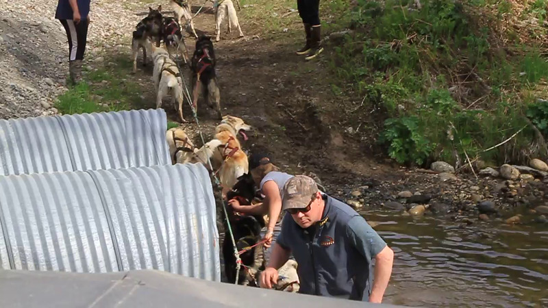 2014-2085 Dogs  cool off