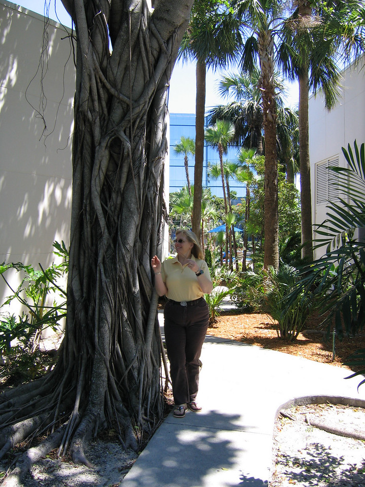 Karen and a strange tree