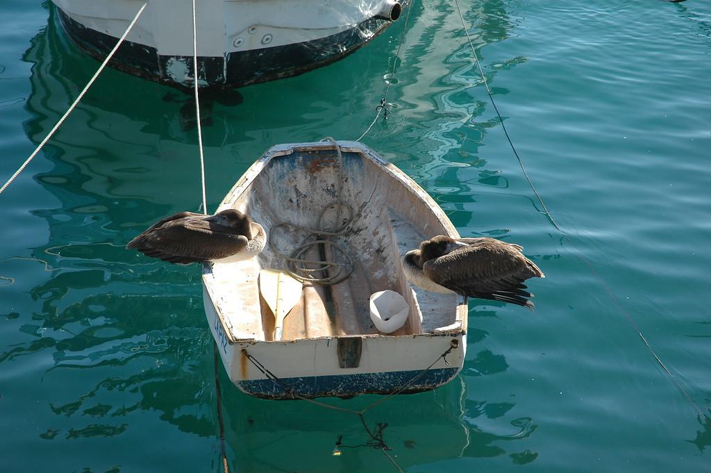 Birds in a Boat