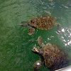 First stop: turtle farm!