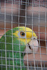 Loved this guy, talkative parrot in a huge cage along a beach walkway in Placentia.