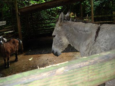 Ocho Rios, Jamaica  - Sunday, Dec 31, 2006, Day 9
