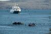 Galapagos Trip - Galapagos, Puerto Egas, Santiago Island<br /> Xpedition zodiacs on their way to land
