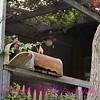 Abandoned Cottage 03