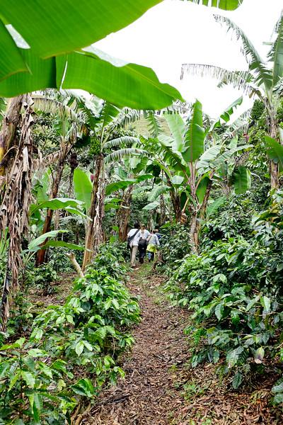 Jungle Tunnel