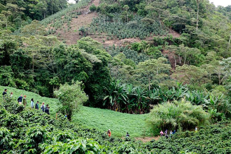 Coffee Hills