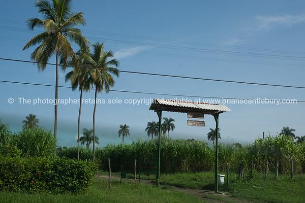 """Sugar plantation.<br /> Cuba, <br /> Prints & downloads.                also see;  <a href=""""http://www.blurb.com/b/3586795-cuba"""">http://www.blurb.com/b/3586795-cuba</a>"""