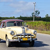Cuban Rick Schmiedt 2013-209
