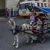 Children enjoying a goat cart ride in Santa Clara