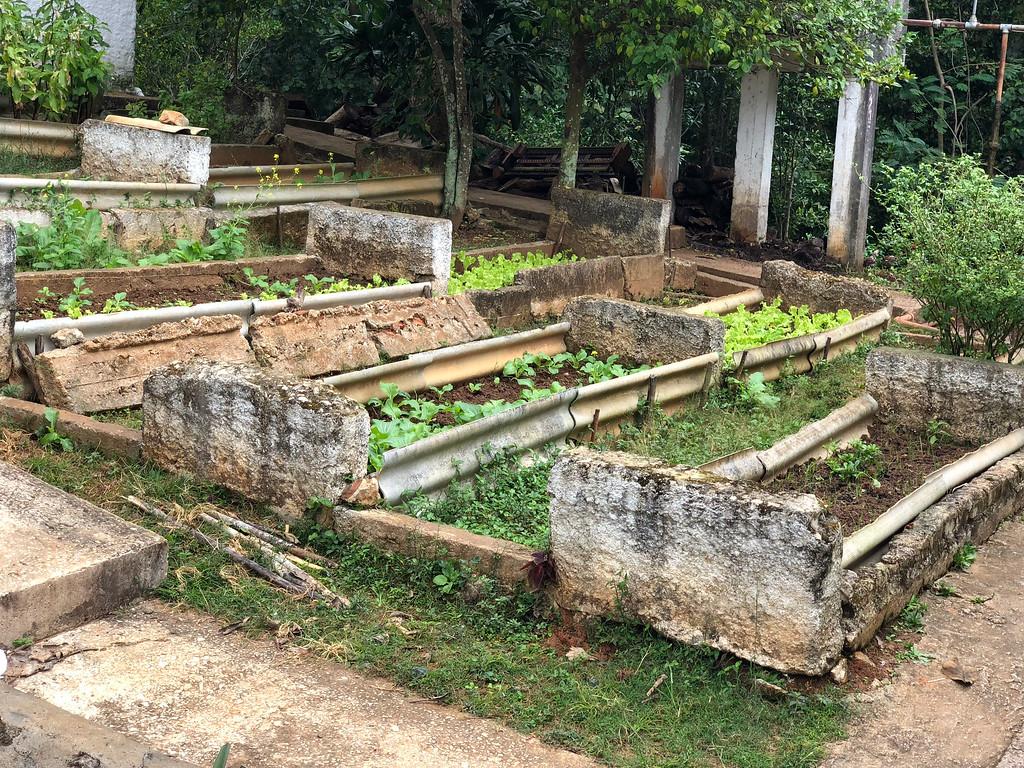 Raised veggie beds next to the school in Las Terrazas